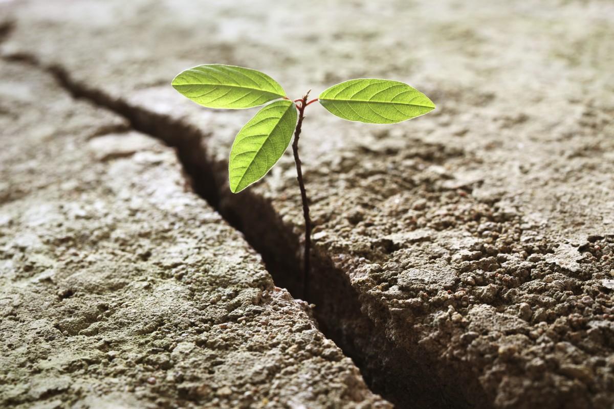 resilience-leafinground.jpg image